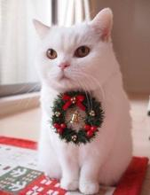 Christmas Decoration Cat