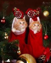 Stocking Stuffer KittensThi