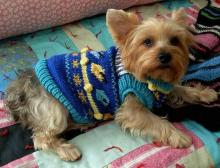 Hanukkah Sweater Dog
