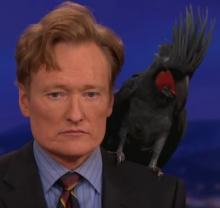 Conan and Bird