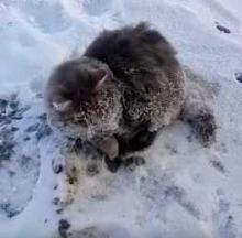 Russian Cat Frozen To The Pavement Saved By Warm-Hearted Couple