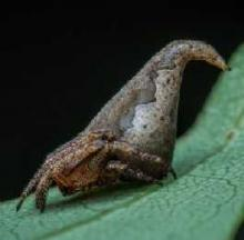New Spider Named For Harry Potter Sorting Hat