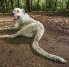 Dog's Tail Certified By Guinness As Being World's Longest