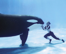 Mixed Emotions Over Death Of Tilikum, SeaWorld's Orca Whale