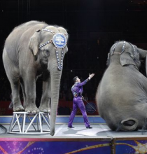 Curtain Comes Down On Ringling Bros. & Barnum & Bailey