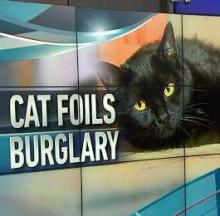 Cat Foils Home Burglary In The Most Cat-Like Way Possible