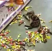 Catnip Crazed Cat Nabbed In Netherlands Pet Store