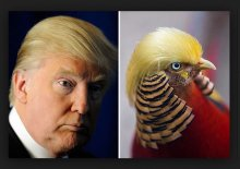 The Trump Bird That Doesn't Tweet