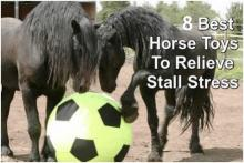 Best horse toys to relieve stall stress