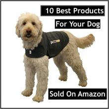 10 Best Products For Your Dog