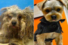 'Unwanted NYC Pets' Does Makeovers To Help Rehabilitate Dogs & Cats
