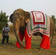 Elephant Pajamas Warm Rehab Center's Rescued Pachyderms
