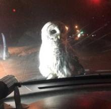 Owl's Well That Ends Well For Duluth Police Officer
