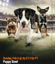 Puns Proliferate For Puppy Bowl XIII