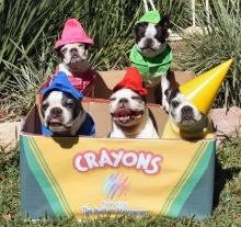 Crayon Dogs