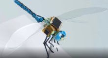 The New Art Of War: Cyborg Insects & Entomological Warfare