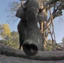 Annoyed Elephant Kicks GoPro Camera To The Curb