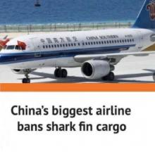 Shark Fin Cargo Banned By China's Largest Airline