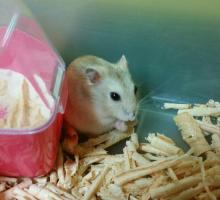 The Truth About Hamsters: Sorting Through the Myths