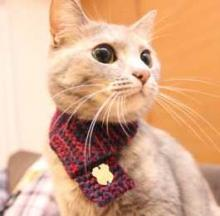 So Cat Scarves Are A Thing Now