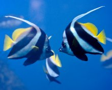 Landmark Study Fleshes Out Fishy Friendships