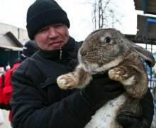 Giant Rabbits Hopping Their Way Into Hearts & Minds