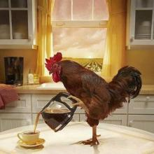 Caffeinated Rooster