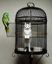 Parrot Cage Turn-About