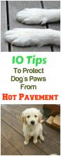 How To Protect Your Dogs Paws From Hot Pavement