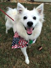 Memorial Day Celebrations & Pets