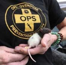 Pet Mouse Who OD'd On Heroin Is Successfully Revived