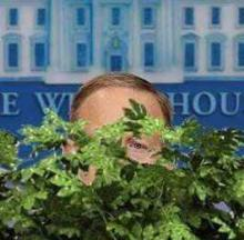 Spiced Out: 7 Pets & Animals Who Rock The Bushes Like Sean Spicer