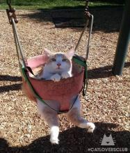 Swinging Cat