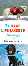 Best Life Vest For Dogs