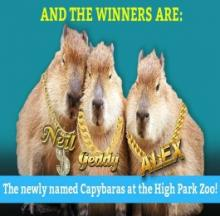 What A RUSH! Capybara Triplets Named After Rock Stars
