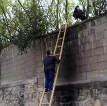 Zoo's High Walls Keep Animals In But Can't Keep People Out
