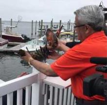 Hold The Butter: 132-Year-Old Louie the Lobster Returns To The Sea