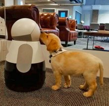 Introduce Your Household Pet To Your Household Robot
