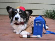 Doctor Who Dog