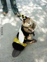 Beaver Dressed as a Bee