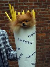 French Fry Dog