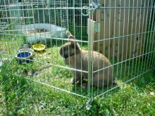 Provide your rabbit with plenty of shade this summer