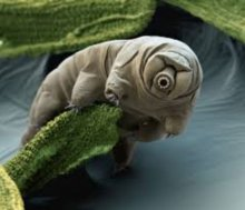 Tardigrade, The One Animal On Earth Able To Survive An Apocalypse