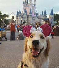 Dog Fan of Minnie Mouse