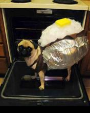 Baked Potato Pug