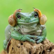 Princess Leia Frog