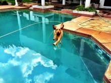 Cannonball Dog