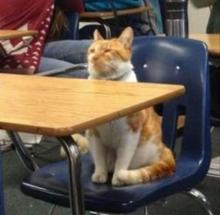 Back to School Cat
