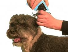 The BendiBrush conforms to the shape of your pet