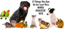 5 things you can do for pets abandoned in crises